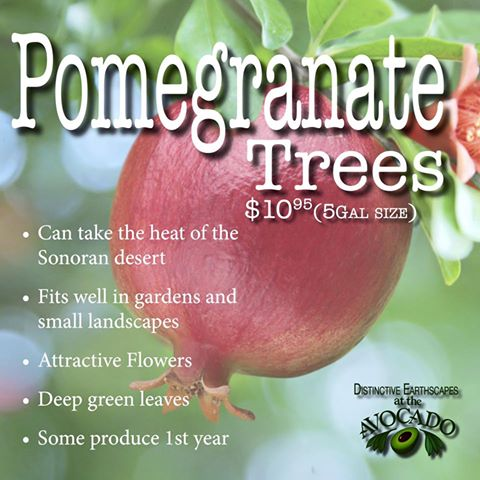 Pomegranate Sale