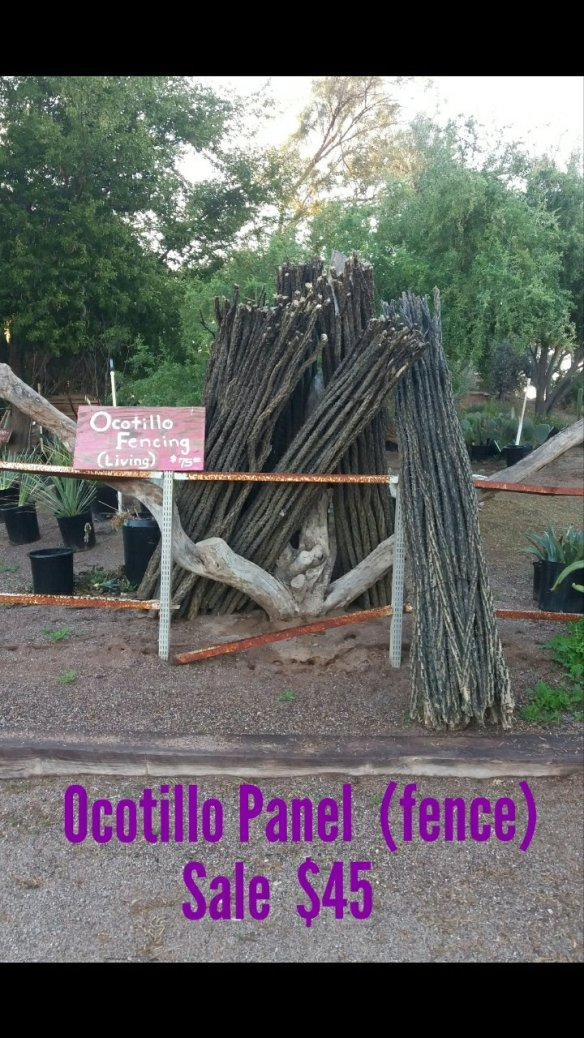 Ocotillo FENCE sale | Distinctive Earthscapes at The Avocado