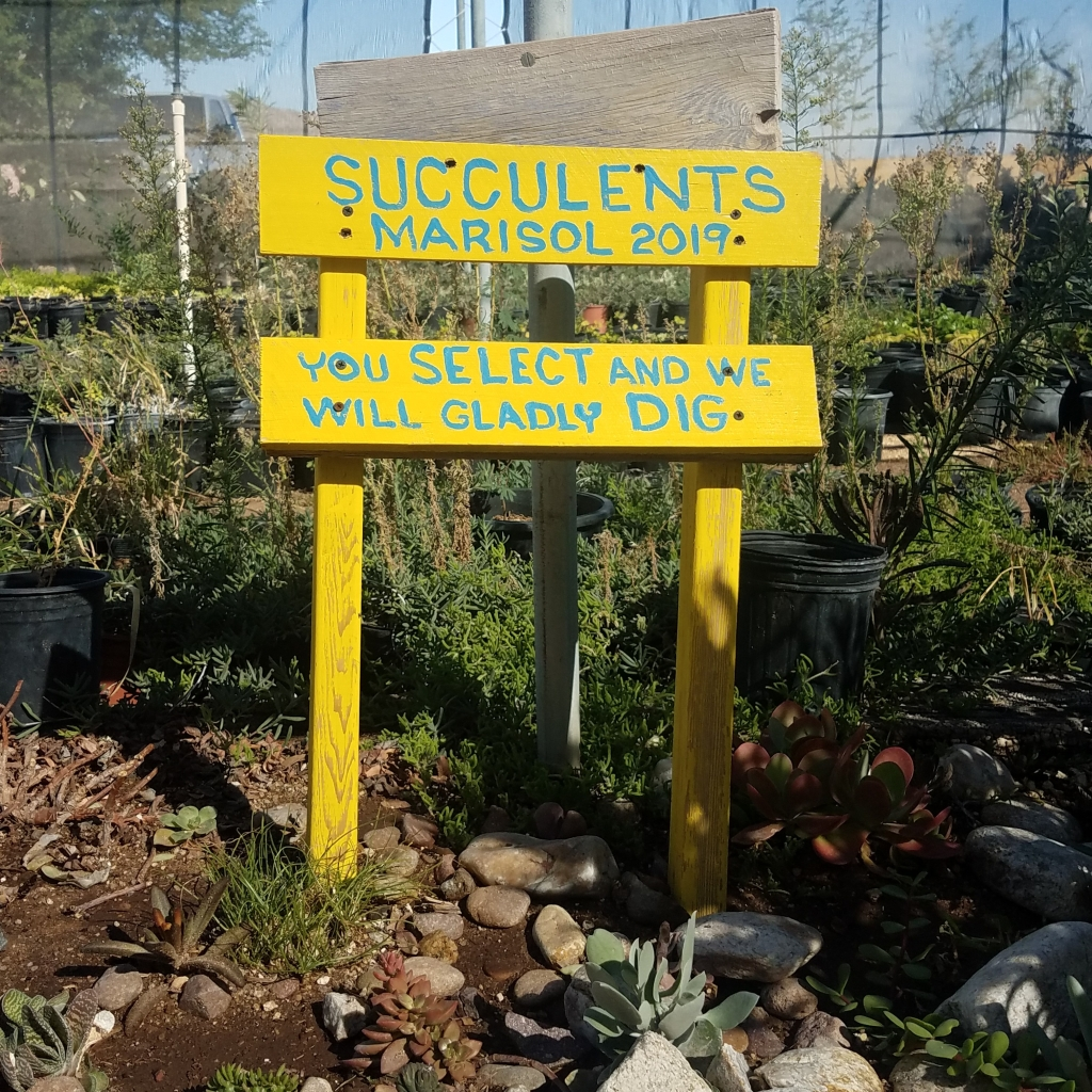 Succulents Sign