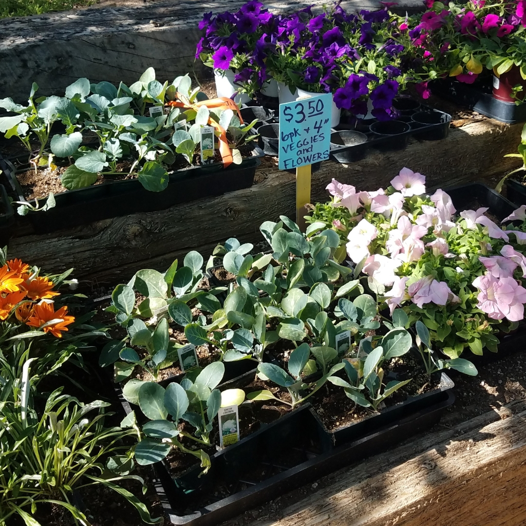 Flowers Low Price
