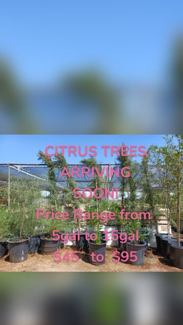 CITRUS TREES ARRIVING SOON! Price Range from 5gal to 15gal $45 to $95